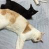 ★猫好き・ちょっぴり怖がりさん  チビクロちゃん★ サムネイル5