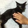 ★猫好き・ちょっぴり怖がりさん  チビクロちゃん★ サムネイル6