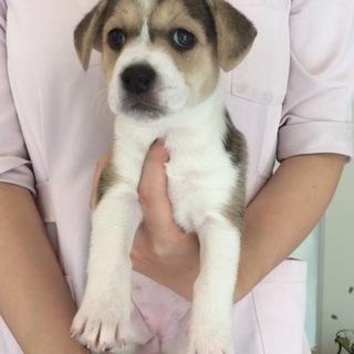 『ウシ子』中型犬以上飼育経験者希望!