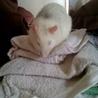 マウスファン