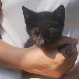 緊急!まん丸まる顔の黒猫君 2.3ケ月