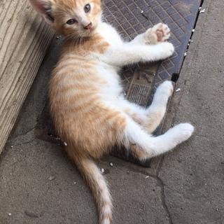 宮城県栗原市より子猫4匹の里親を探しています