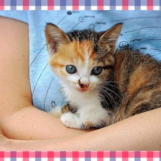 人懐っこい子猫 の里親探してます。