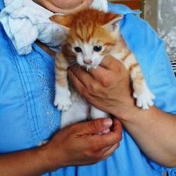 保護猫 譲渡会 in 明石