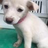 白い半垂れ耳の可愛い子