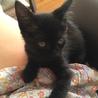 3ヶ月の黒猫女の子