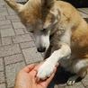 握手(^^)人(^^)