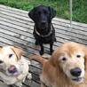 DOT  MITO!すべての犬と猫の幸せを願って保護活動中
