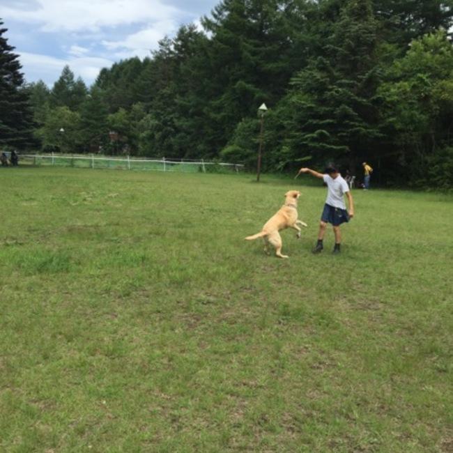 DOT  MITO!すべての犬と猫の幸せを願って保護活動中のカバー写真