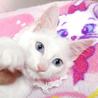 美系の青い目☆リリちゃん 3ヵ月