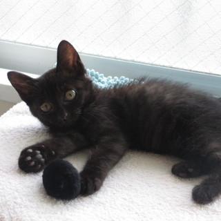 生後2ヶ月 元気いっぱいの黒猫君です!!