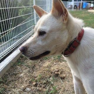 紀州犬 訓練を終え賢い家庭犬になりました。