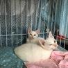 トライアル中、一時停止//わんぱく双子男子/白猫