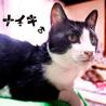 白黒ハチワレ♡猫初心者向けスリゴロ10ヶ月ナイキ