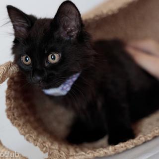 元気で懐こい黒猫 くろみちゃん