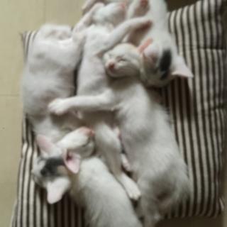 五匹生まれました。雄2匹雌3匹です。