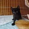 募集停止 生後1カ月半 人懐っこい子猫