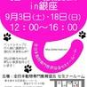 銀座会場!9月3日(土)『ねこざんまい譲渡会』沢山の子猫ちゃんたちが新しい家族を待っています♪