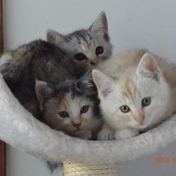 姉妹3匹(*^^*)