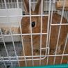 ウサギが好きな方を募集します。