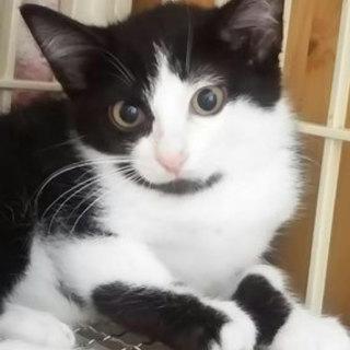 猫会の猫*健康チェック済*2か月半男の子
