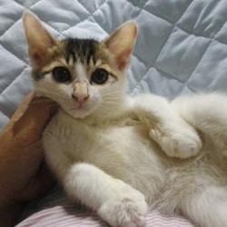 三鷹市で猫の譲渡会を行います。
