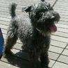 中型サイズの洋犬MIXの女の子!仮名は「マーチ」