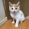可愛い2匹の兄弟子猫の里親様を募集します。