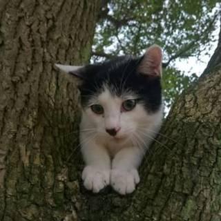 公園の木の上でふるえていました❗