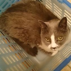 ご主人のお風呂をカゴの中で待つ猫