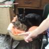 男同士仲がいい老猫セット♪いつも抱き合って寝てます♪