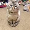 とても人懐っこい猫ちゃんです。