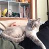 とても人懐っこい猫ちゃんです。 サムネイル2
