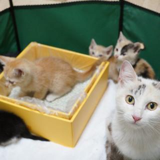 母猫と子猫5匹