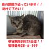8/25引出し♡新しい飼い主さんにお届け☆2匹で!
