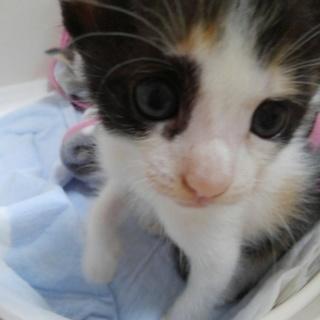 可愛い子猫、いりませんか?