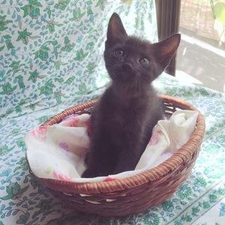 黒猫の兄妹