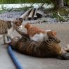 母猫1歳くらい、子猫2ヶ月くらい2匹、里親様募集。