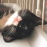 チーム菊池(火の国cats)