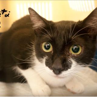 白黒10ヶ月♡緑の目の猫初心者向け懐こいナナ