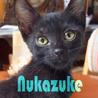 生後3ヶ月♡黒猫すりごろ性格の良いぬかづけ
