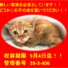 期限9月4日迄!!茶トラの可愛い子猫ちゃんです☆