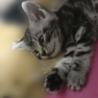 かわいい仔猫です