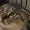 威嚇と猫パンチちゃんを気長に愛せる方募集♪