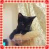ものすごく甘えっこ・黒猫 女の子 先住猫OK