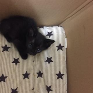 黒猫の子猫4兄弟!