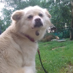 月例 9月の犬猫譲渡予約会(兼猫カフェ)