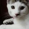 実家の猫ちゃん