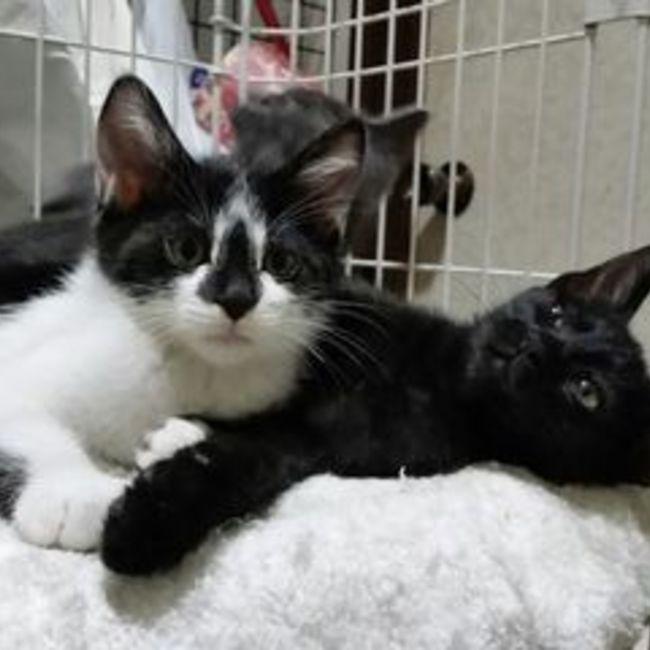 地域猫から社会猫へ・人と猫の共生を図る対策会議のカバー写真