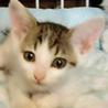 美猫4兄妹、人間が大好きです。